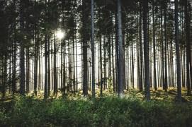 200905-183121-skog-1D8A6405