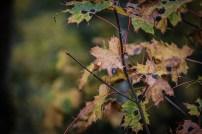 201010-111232-leaf-IMG_5515