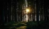 201018-172306-skog-sol-IMG_5934