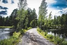 200717-143427-skog-1D8A5930