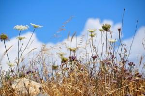 © Beatrice Otto Delos wild flowers