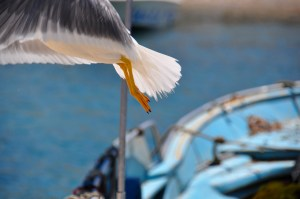 seagull and boat