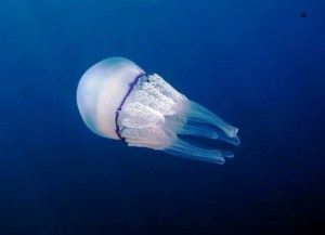 medusa-460×332