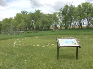 A tipi ring and story board tell visitors on the nature trail about the early villages.