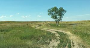 A section line road of just two tracks leads across the prairie in Dunn County.