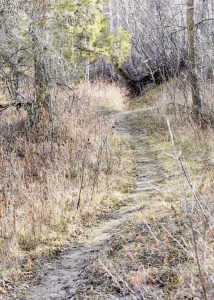 A trail through the trees invites hikers to start a venture exploring the ruggedness of the park.