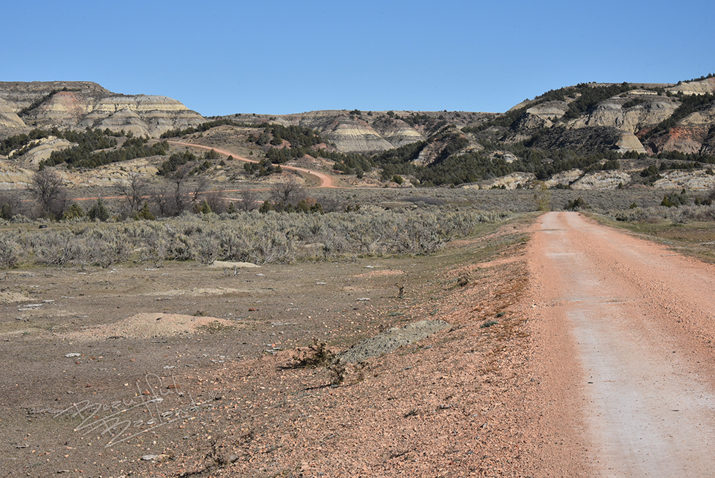 A road goes past a prairie dog town, and past a brushy area not yet consumed by the prairie dogs.