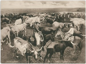 a short history of the Longhorns on the Long X trail begins here with cowboys in Texas