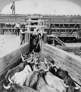 Theshort history of Longhonrs on the Long X includes chicago stock yards.