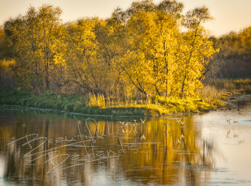 Confluence Center in the fall