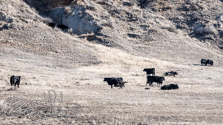 Highway 16 Three V Ranch