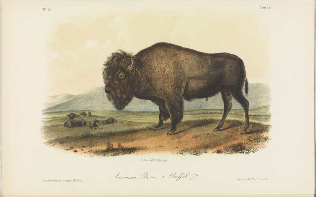 bison fur trade scientist James Audubon