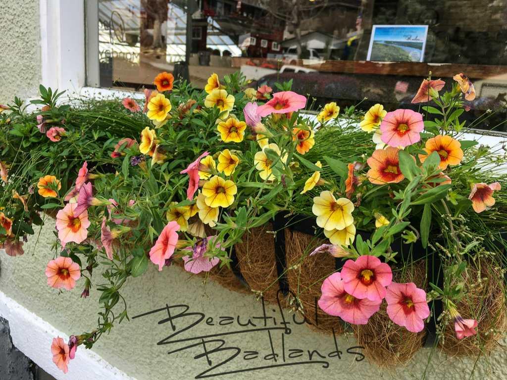 coffee, coffeeshop, flowers, greenhouse