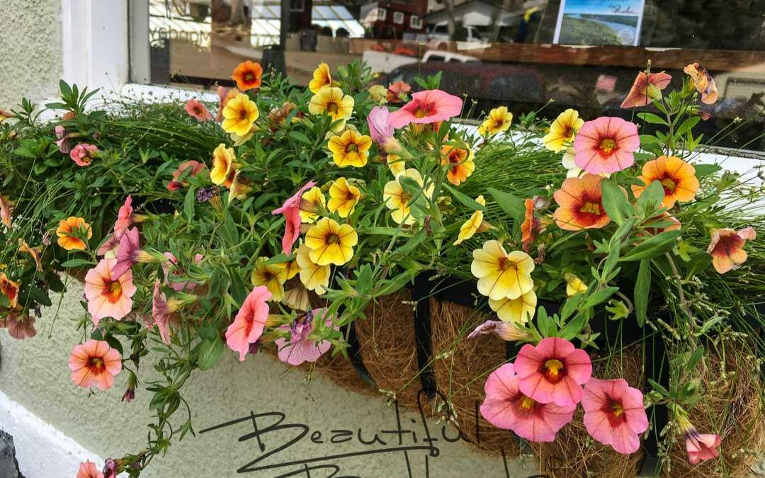 Coffee + Blooms = Badlands Heavenly!
