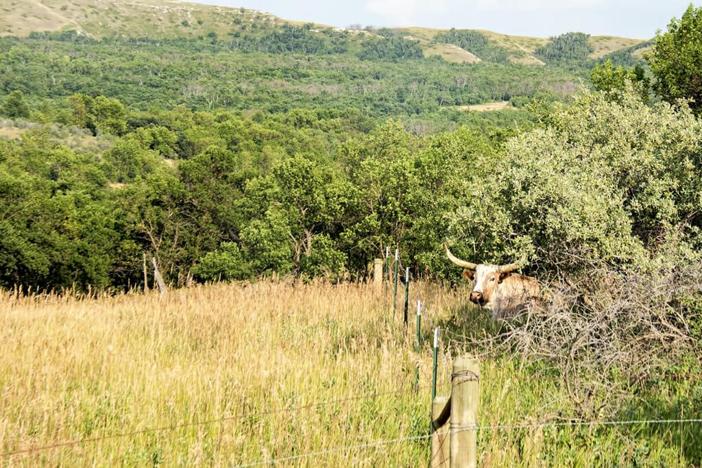 scenic byway longhorn