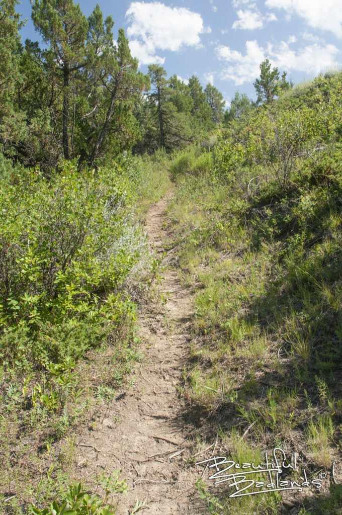 hot hike summit trail trees
