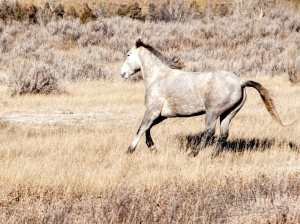 wild horse south unit