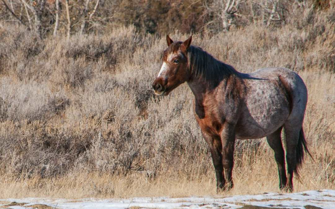 Wild horses on their own all winter — Saturday Snapshot