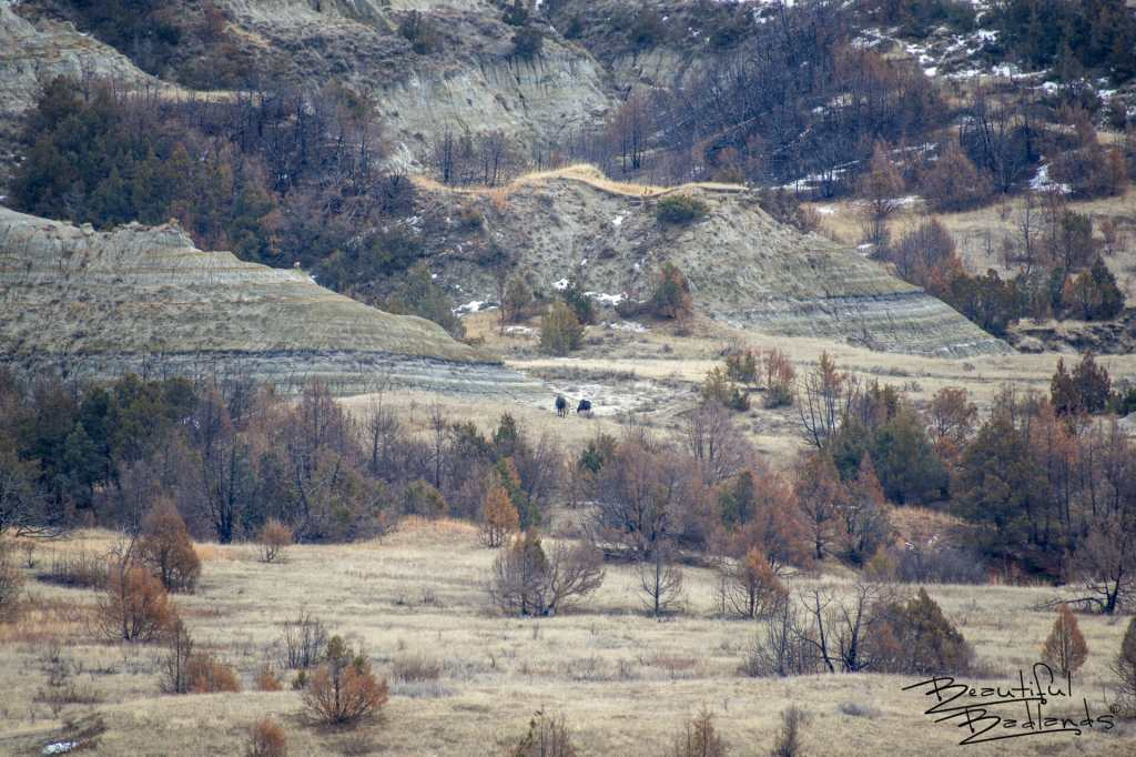 Wild Horses in Distance, Theodore Roosevelt National Park, North Dakota