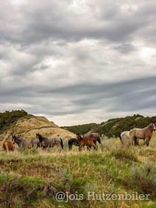Wild Horses of Theodore Roosevelt National Park 12, Jois Hutzenbiler