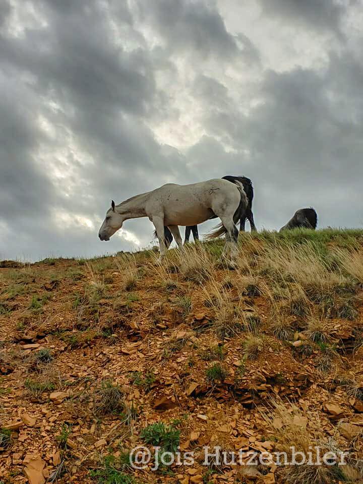 Wild Horses of Theodore Roosevelt National Park 9, Jois Hutzenbiler