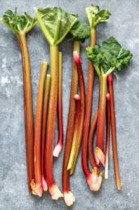 Rhubarb Pulled from the Plant