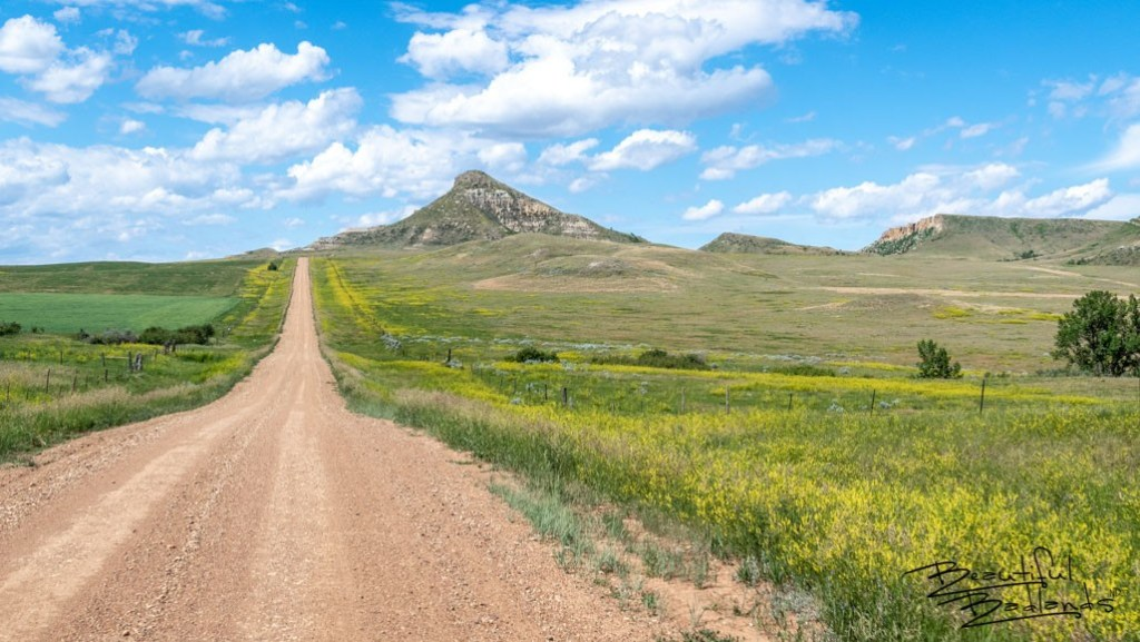 Driving East on Square Butte Road in June presents landscapes most people would never identify with North Dakota. The greens of the grasses and assorted crops are punctuated by brilliant yellow wild clover.
