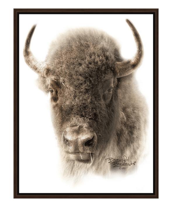 Sepia Bison Portrait Walnut Floating Frame Canvas Wrap