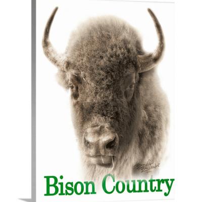 Bison Country Sepia Portrait/Green Text Canvas Wrap