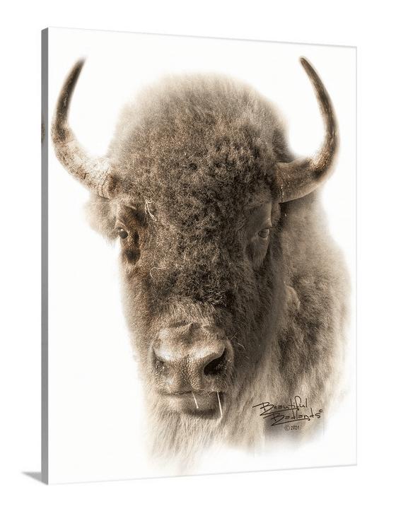 Bison Sepia Portrait Canvas Wrap