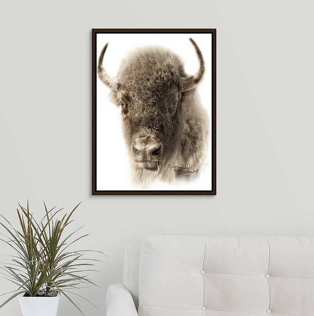 Bison Sepia Portrait Walnut Floating Frame Canvas Wrap (on wall)