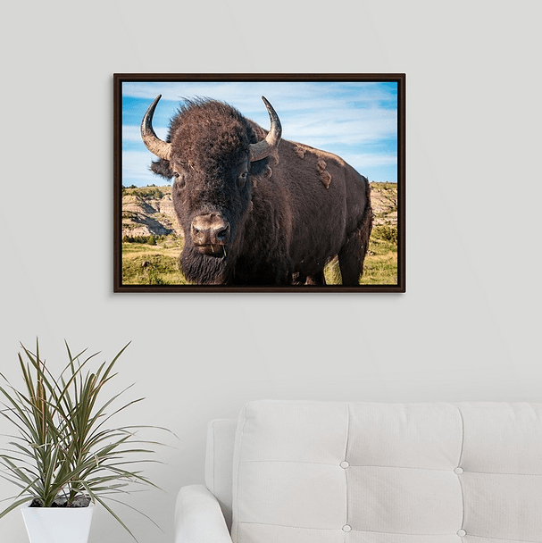 Bison Up Close in Color Walnut Floating Frame Canvas Wrap (on wall)
