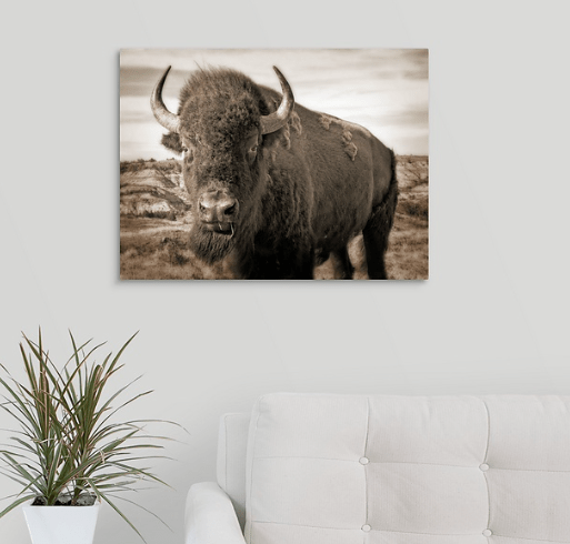 Bison Up Close - Sepia Canvas Wrap (on wall)