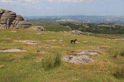 Haytor Vale, from Haytor, Dartmoor