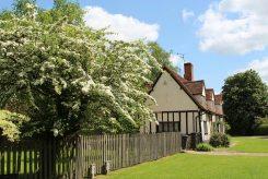 May blossom, Benington