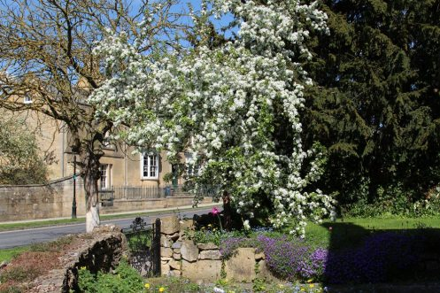 May blossom, Broadway, Cotswolds