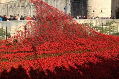 Cascade of poppies over bridge to Byward Tower, Tower of London