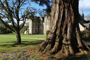Redwood tree trunk and Wakehurst Place Mansion, Wakehurst Place, Ardingly