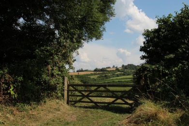 Countryside, Wellow