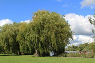 Radnor Gardens, Twickenham