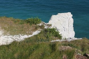 Chalk cliff, Old Harry Rocks, Studland