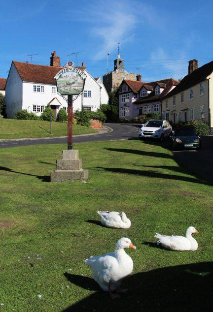 Geese, Finchingfield
