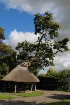 Thatched tree shelter, East Claydon