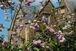 Cherry blossom, Adlestrop House, Adlestrop