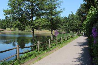 Path beside Obelisk Pond, Virginia Water