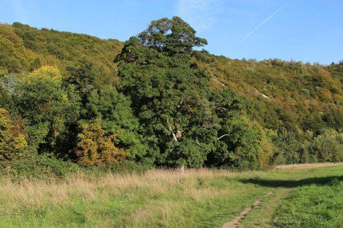 Burford Meadow, below Box Hill