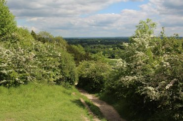 Path to Dorking, from Box Hill