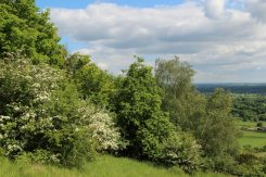 Spring, below Salomons Memorial and Viewpoint, Box Hill