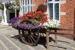 Flower display, Council Offices, Farnham