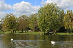 The Lake, Painshill Park, Cobham